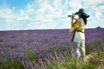 Lavender Fields, Provence, France, July 2014