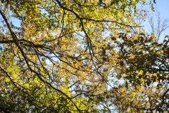 McKinney Falls State Park, Fall 2015