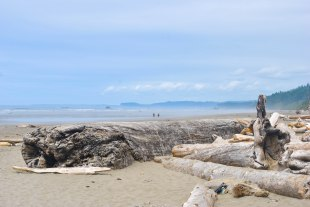 Pacific Ocean, Kalaloch Campground at Olympic National Park, July 2017